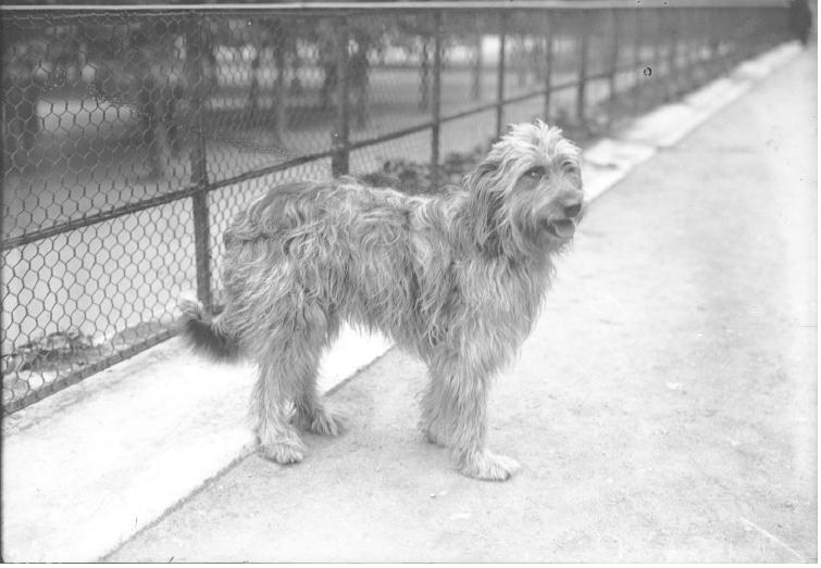 1924 : taxe sur les chiens dans Vie de Lucien expo-caninie-rol-1912
